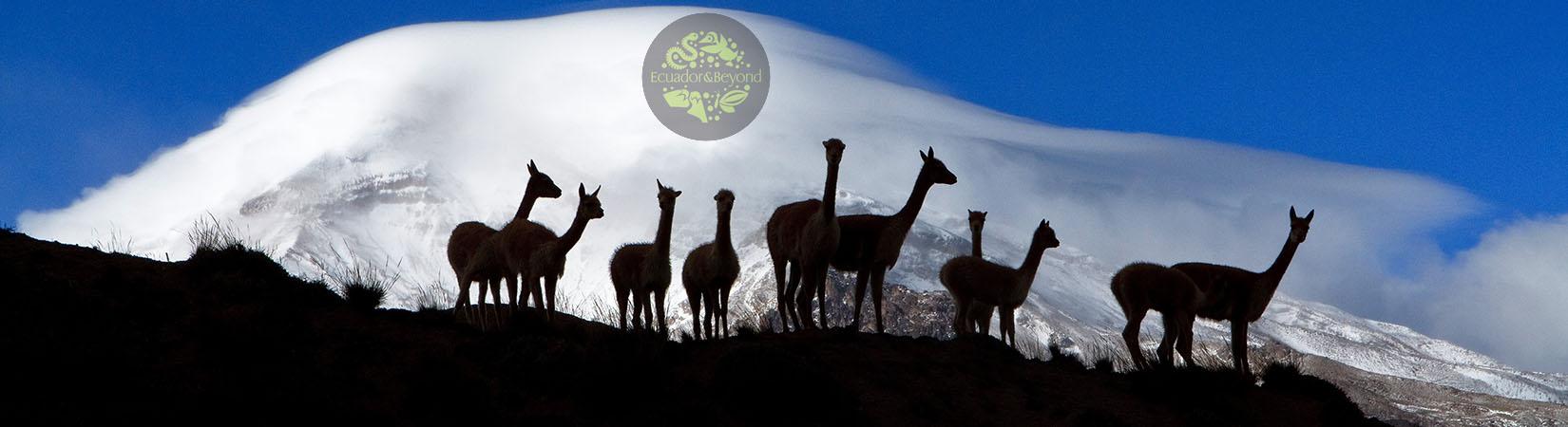 Reserva faunística Chimborazo